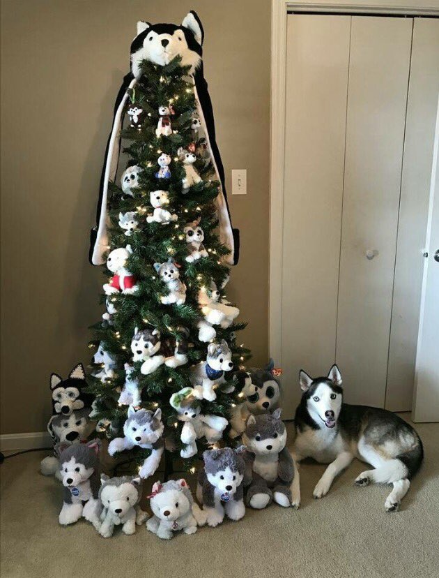 When doggo gets his own tree