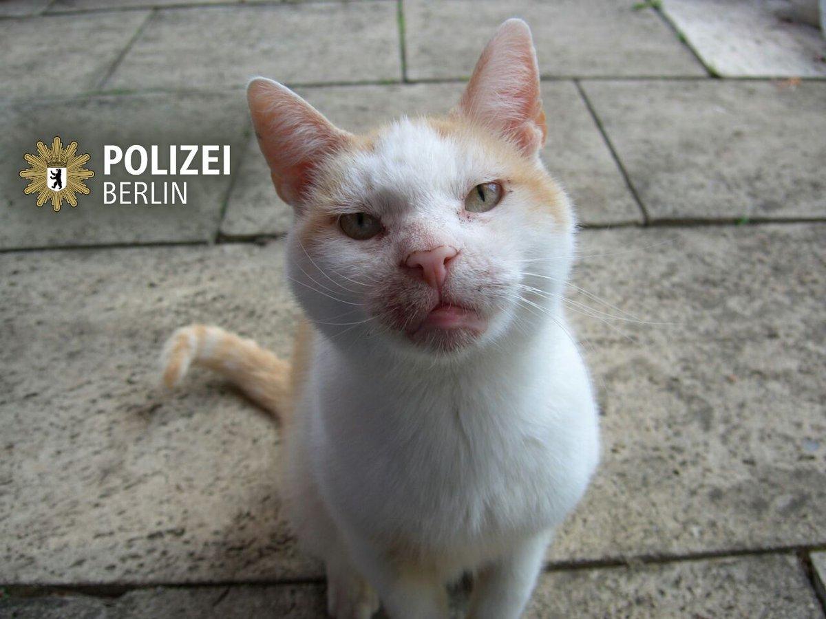 @PolizeiBerlin_E