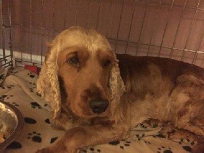 Wadars Dog Rescue