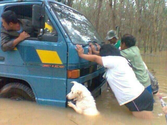 """ต่อไปห้ามพูดว่า  """"พอเดือดร้อน ไม่เห็นมีหมาตัวไหนมาช่วย """" นะ เอามาจาก group line. https://t.co/Zn9Ydb4pIK"""