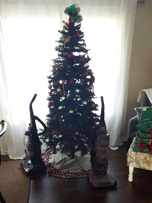 C0T3nQDVQAQRGRq - How to Protect Your Christmas Tree from Pets - Lifestyle, Culture and Arts