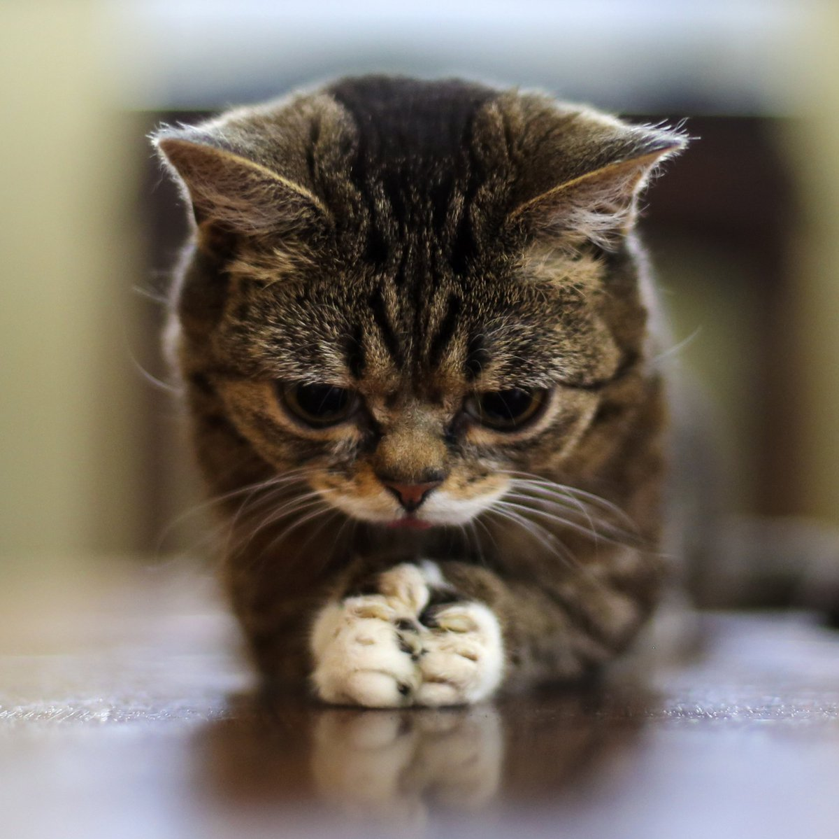lil bub - photo #21