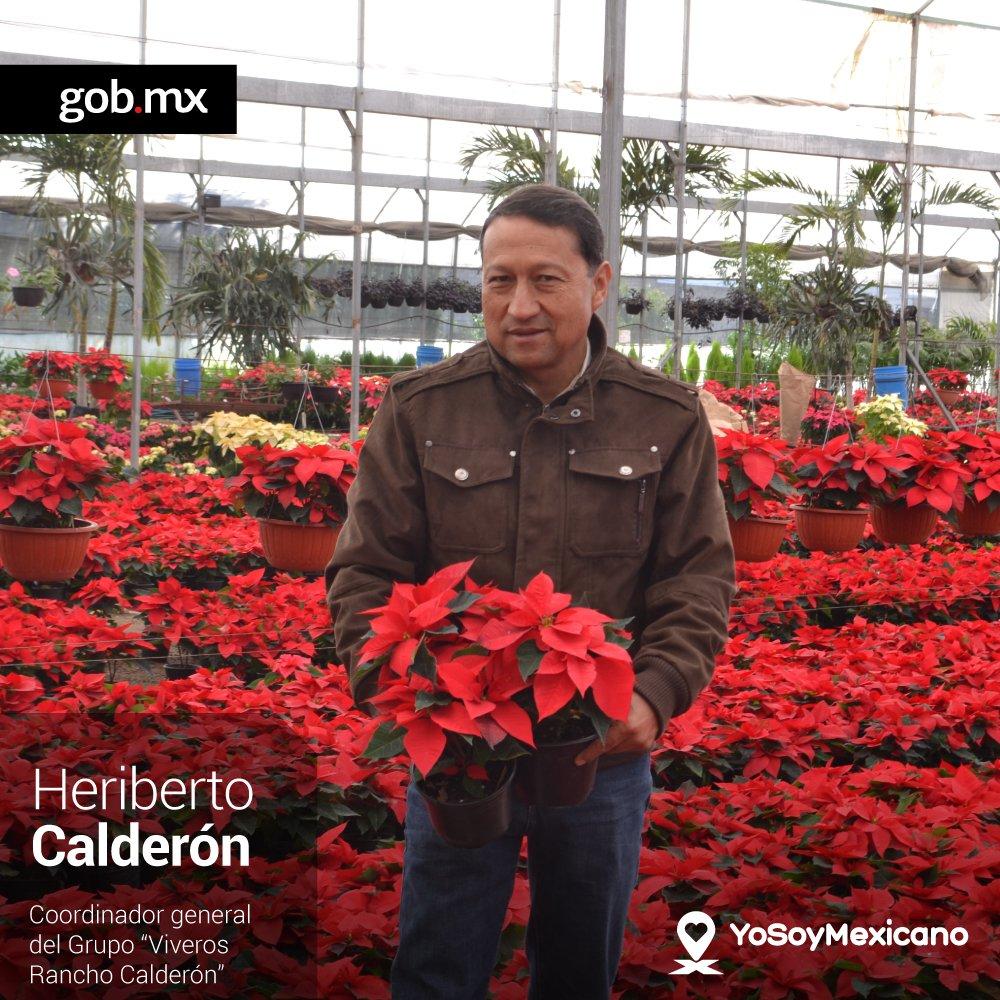 Desde hace 20 a os heriberto calder n trabaja en la for Produccion de plantas ornamentales