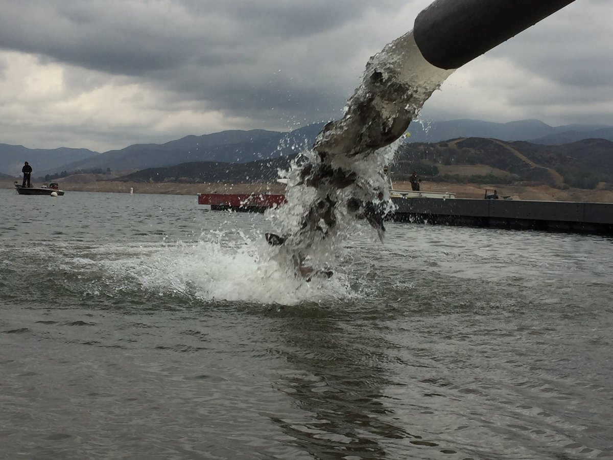 Scuba himes on twitter trout stock at castaic lake for Castaic lake fishing