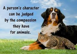 animals showing compassion - photo #37