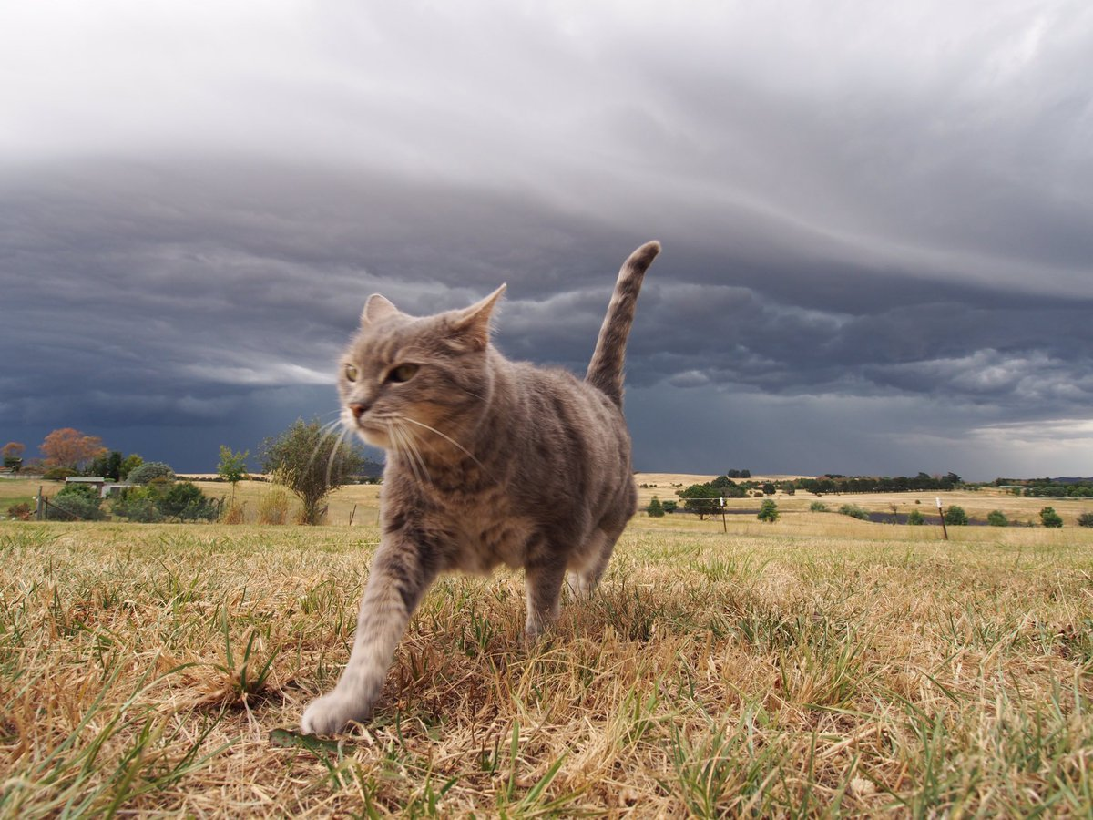 Storm cat. https://t.co/TgWo3JPQQw