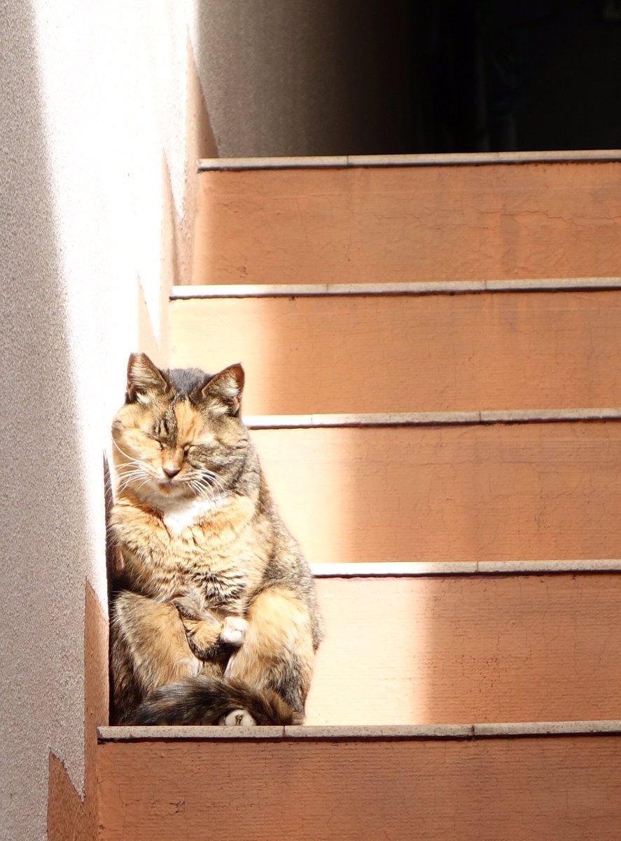 なんか僅かな陽射しを有効活用しようとした結果なのか猫が面白い姿勢で昼寝してた。ぬいぐるみかと思ってたら睨まれた pic.twitter.com/ufGg1RBnd0