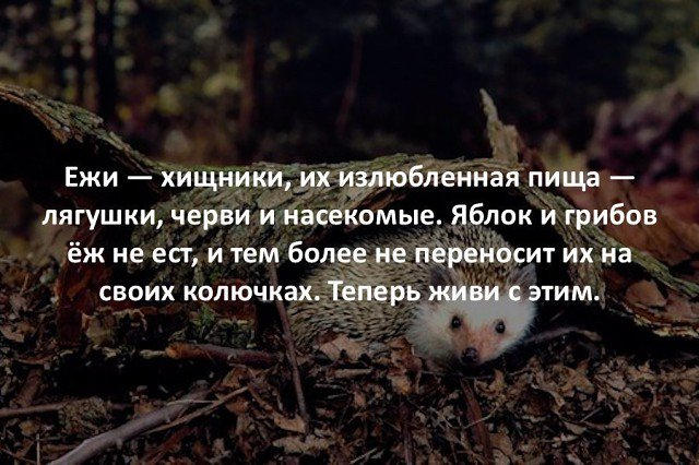 В Новолуганском установили блокпост для противодействия контрабанде под покровительством силовиков, - волонтер Шовкошитный - Цензор.НЕТ 7016