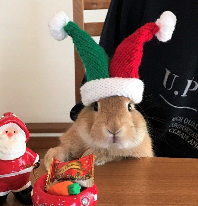 うさぎ仕様のサンタ帽を編んであげた。耳は入れても出してもめっちゃキュート。 pic.twitter.com/iG2jiOlCVr