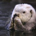須磨海浜水族園のラッコの肉球…可愛すぎて悶絶するレベル!