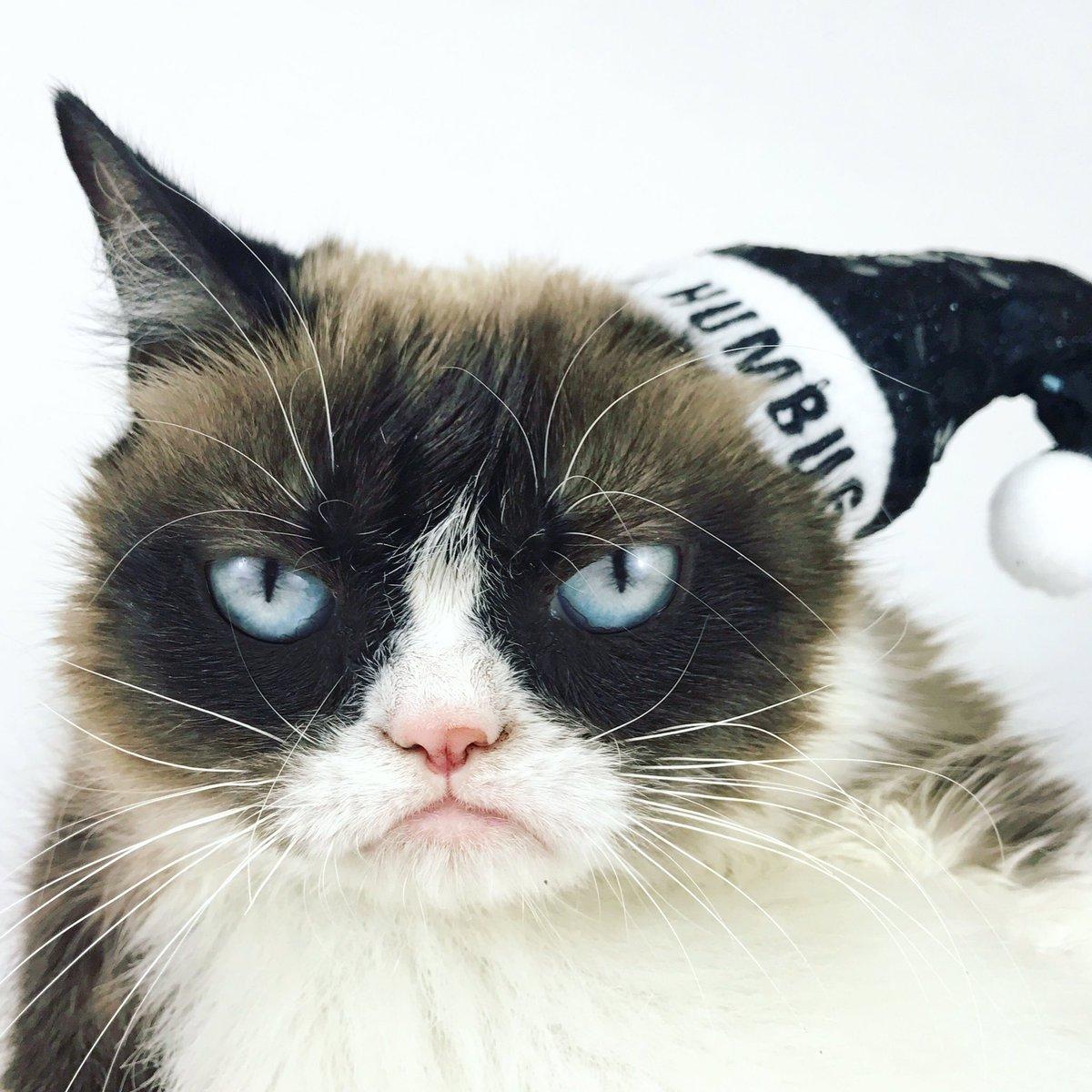 grumpy cat meme generator - HD1200×1200