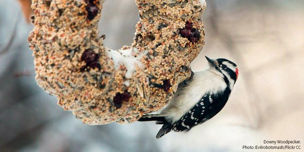 Help Feed the Birds With a DIY Wreath