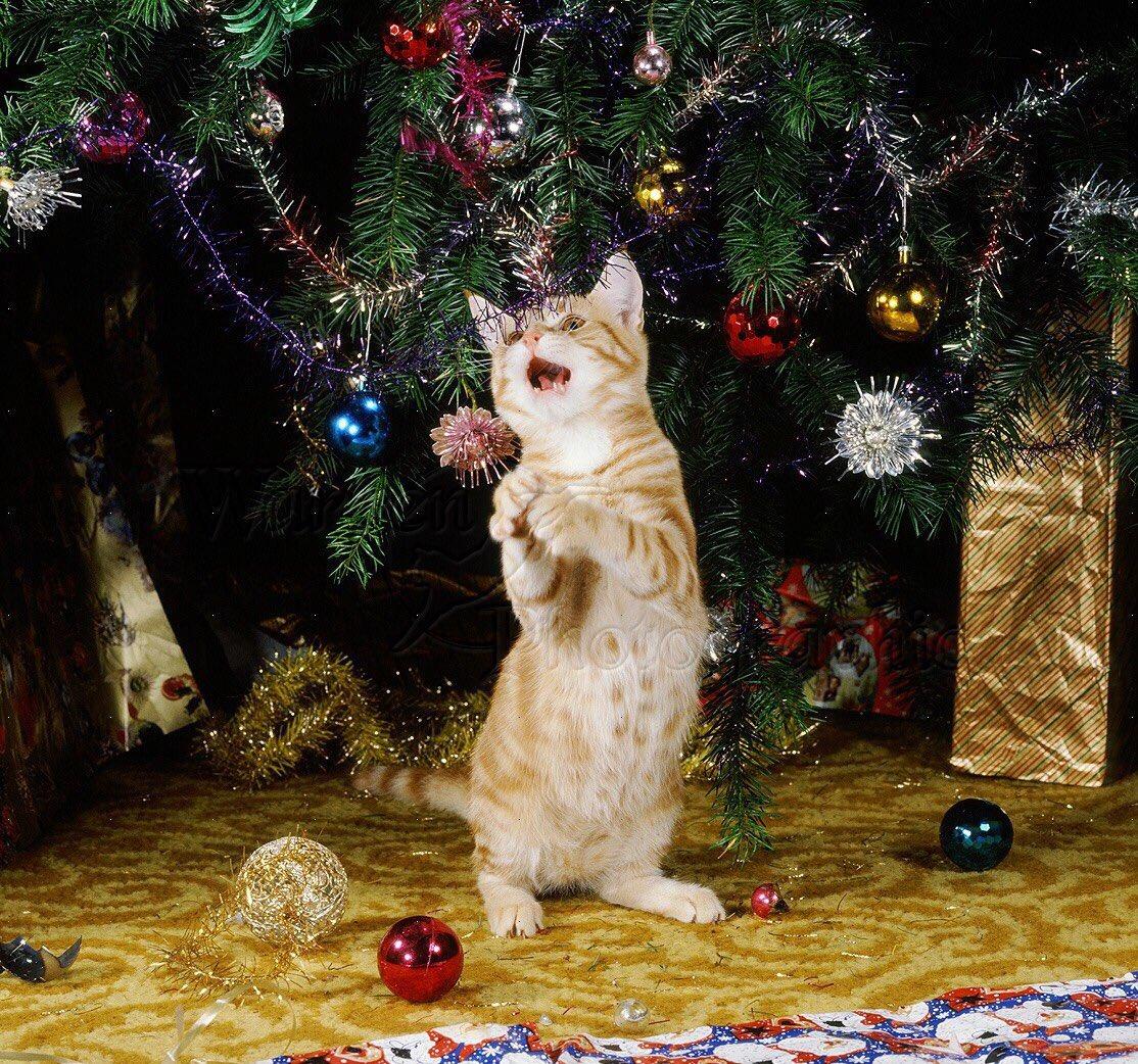 🎤Wreck the tree and blame the doggie... fa la la la la la ... 'tis the...