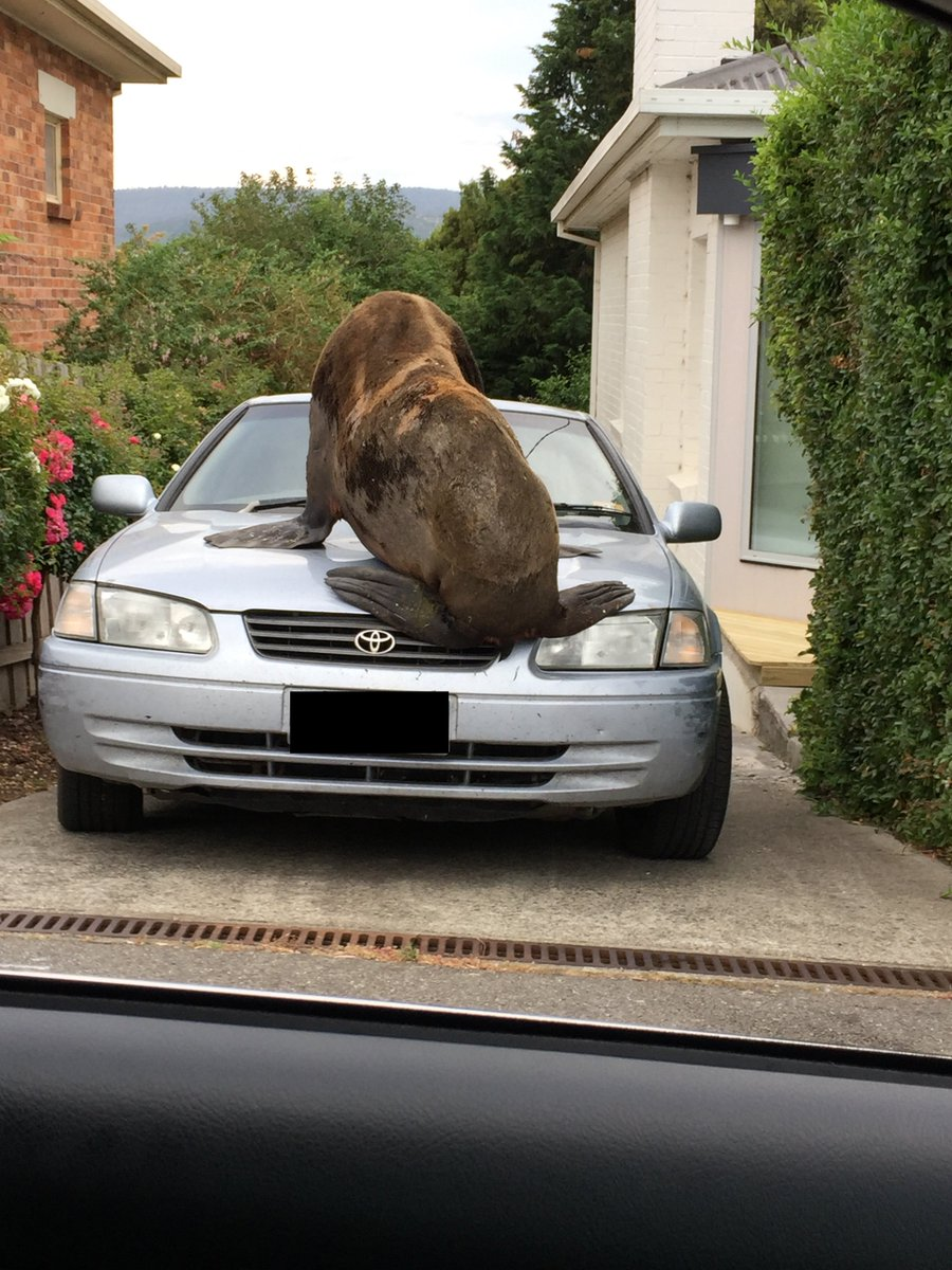 A large seal is on the loose in a neighborhood on the Australian island of Tasmania https://t.co/JkF8A4Yyc3