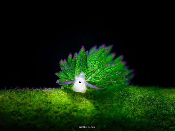 好萌啊!世界上极少数可以进行光合作用的动物之一:叶羊。 https://t.co/s9VC1sXCoq