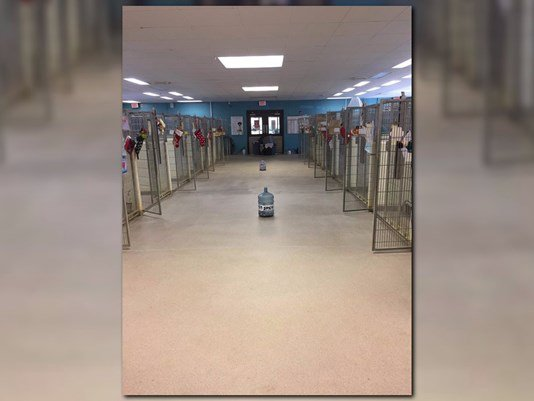 Virginia Beach SPCA celebrating empty kennels, 200+ animals adopted https://t.co/RcWR5glYkl