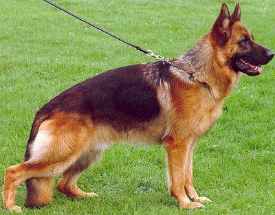 roach back dog