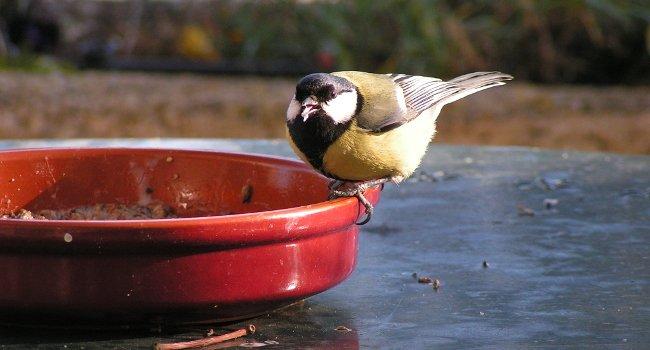 #Hiver 2016/2017 : nourrir les #oiseaux de son #jardin. Tous les trucs et astuces pour un nourrissage réussi =&gt;  https:// l.lpo.fr/g-Iv1  &nbsp;  <br>http://pic.twitter.com/E0UukAz5IH