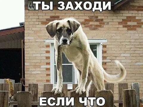 """""""Коломойский сейчас уже другой. Не из-за того, что случилось с """"ПриватБанком"""", а потому, что он хочет конкуренции в небе"""", - Омелян - Цензор.НЕТ 8535"""