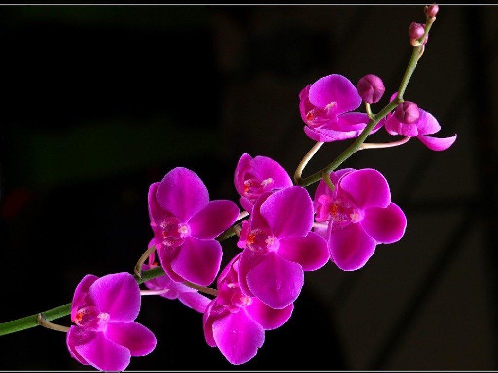 The flower shop atc flowershopatc twitter izmirmasajfo Choice Image