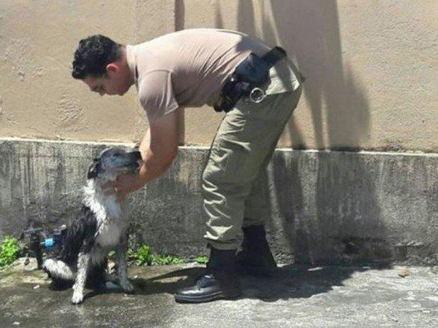 Cão recebe banho de mangueira da PM após desmaiar com calor de 48°C https://t.co/UTRBRGYoob #G1