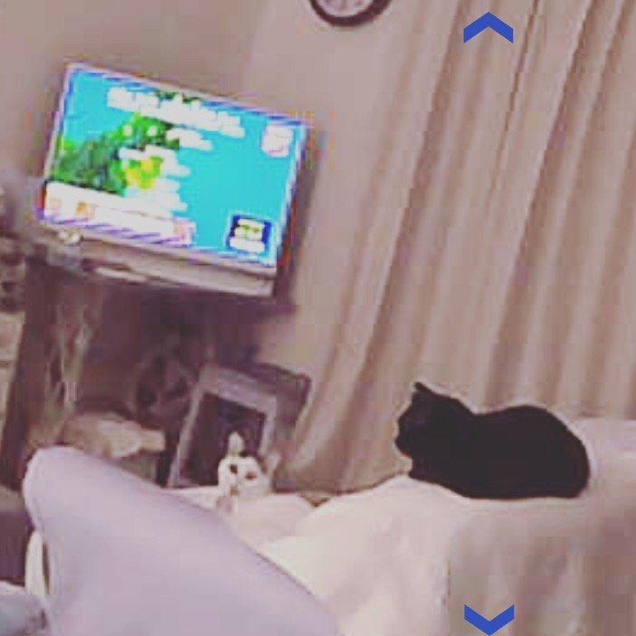 出先なので、家に居る猫たちが地震怖がってないか心配で、あわてて監視カメラを見たら、2人でテレビつけて、ソファーで地震速報見てる…テレビ消して行ったのに(๑°⌓°๑) https://t.co/2S5ZLqYaIR