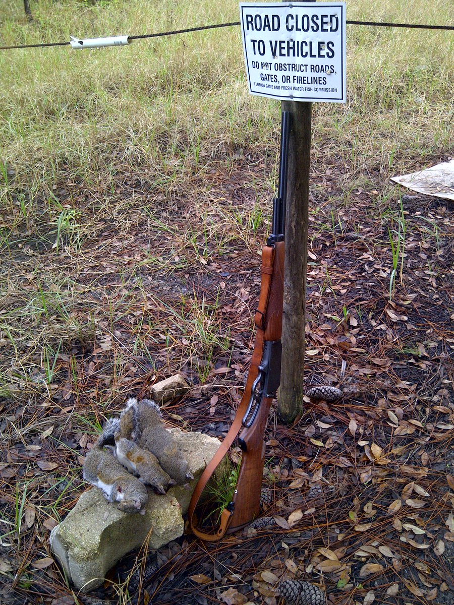 Squirrel hunting with a Marlin 410 Lever Action Shotgun #marlinfirearms #LeverAction #squirrelstew