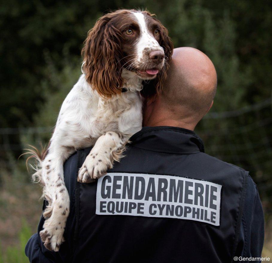 #MonPetitPlaisirÀMoi : travailler en binôme avec mon chien 🐶 pour votr...