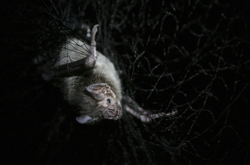 Wild vampire bats are flying in through windows and feeding on humans in Brazil  https://t.co/mRUShB6SwD https://t.co/KbGC9Px57a
