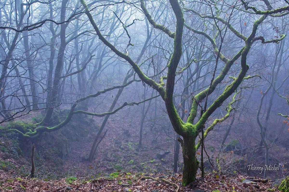 La mystérieuse et envoûtante forêt des #Ardennes #ardenne <br>http://pic.twitter.com/K0hRqKPyYs