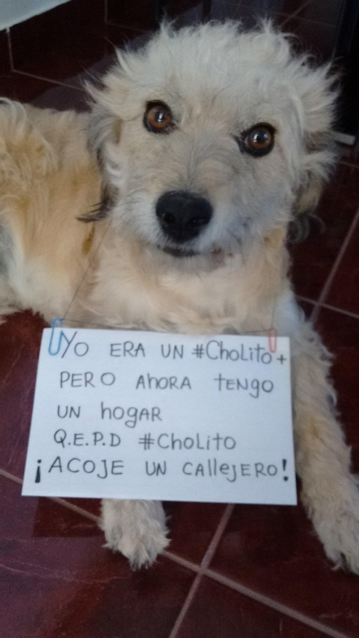 """Thumbnail for La barra se indignó por el asesinato del perro """"Cholito"""""""