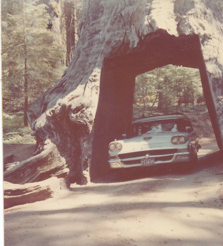 @NPR @CBTAssociation @nytimes That moment another childhood memory topples. (Picture 1962) #TunnelTree #PioneerCabinTree #giantsequoia https://t.co/cT0fQ5Cafe
