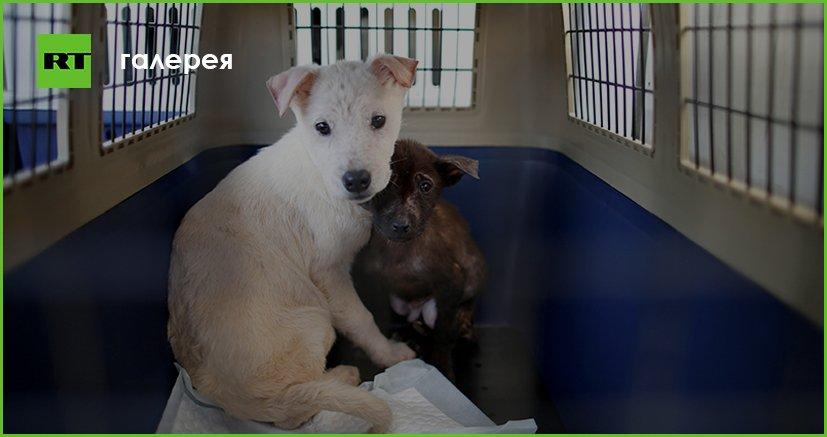 Защитники животных спасли от гибели собак на ферме в Южной Корее