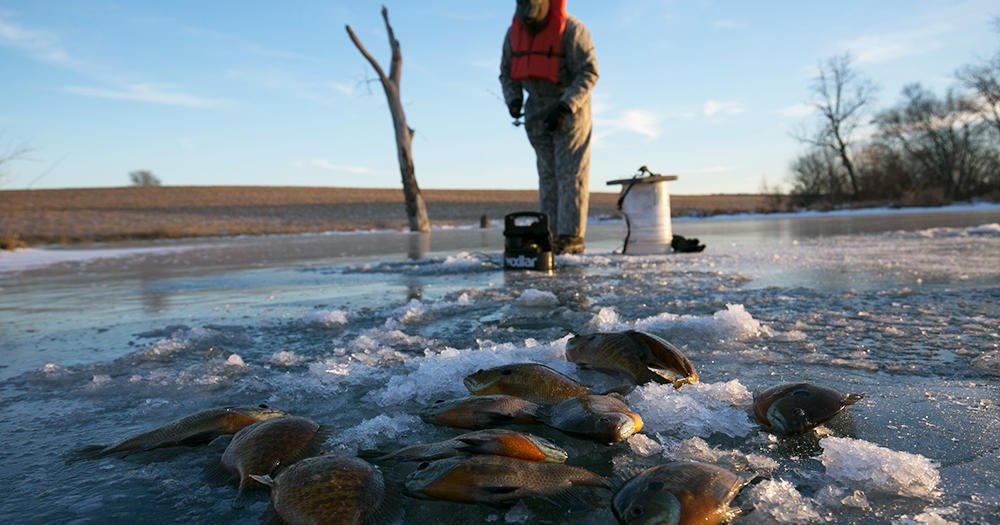 Ne game and parks on twitter wanna learn about ice for Nebraska game fish and parks
