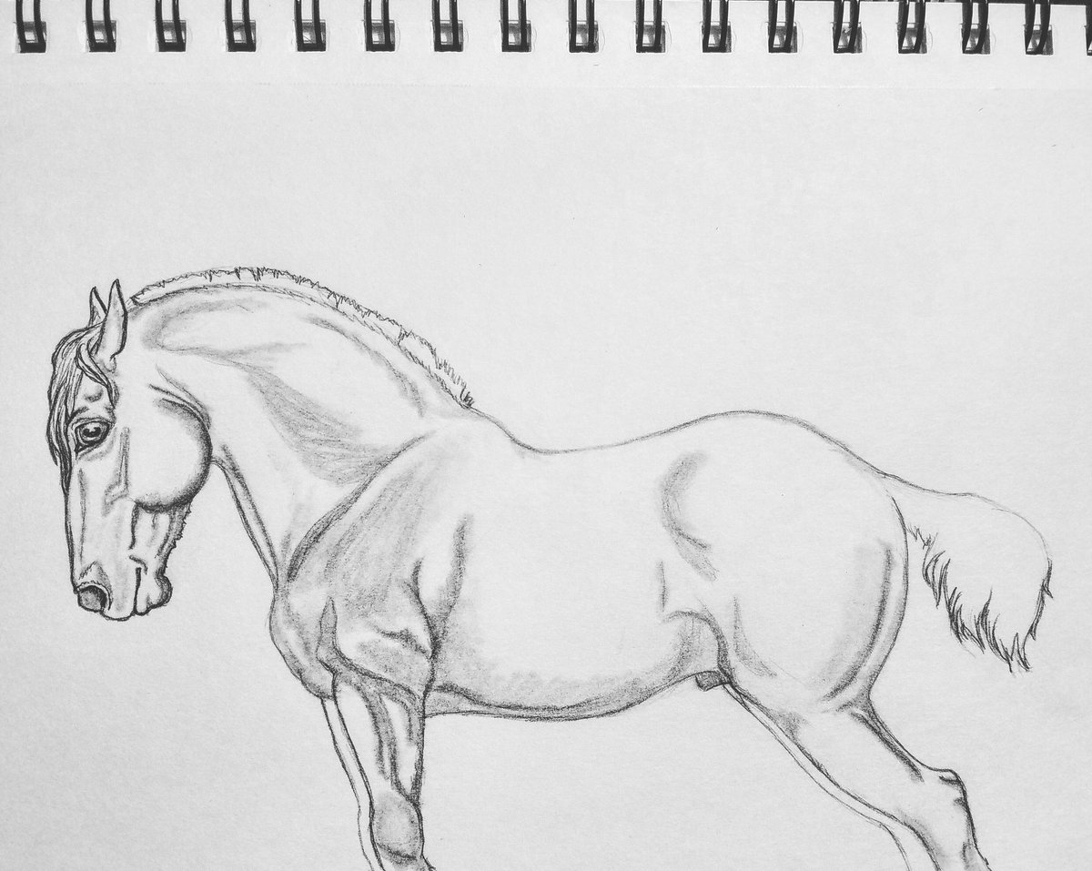 Sunshine Boone On Twitter Drafthorse Horse Horses Art Equineart Horseart Sketch Draw Pencilart Sketchbook Artist Pony Ponyart Sketching Drawing Wip Https T Co Kikf2hiffp