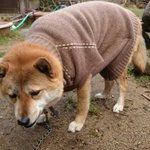 そんなに嫌なの?w初めて服を着た犬の顔がヤバイ!