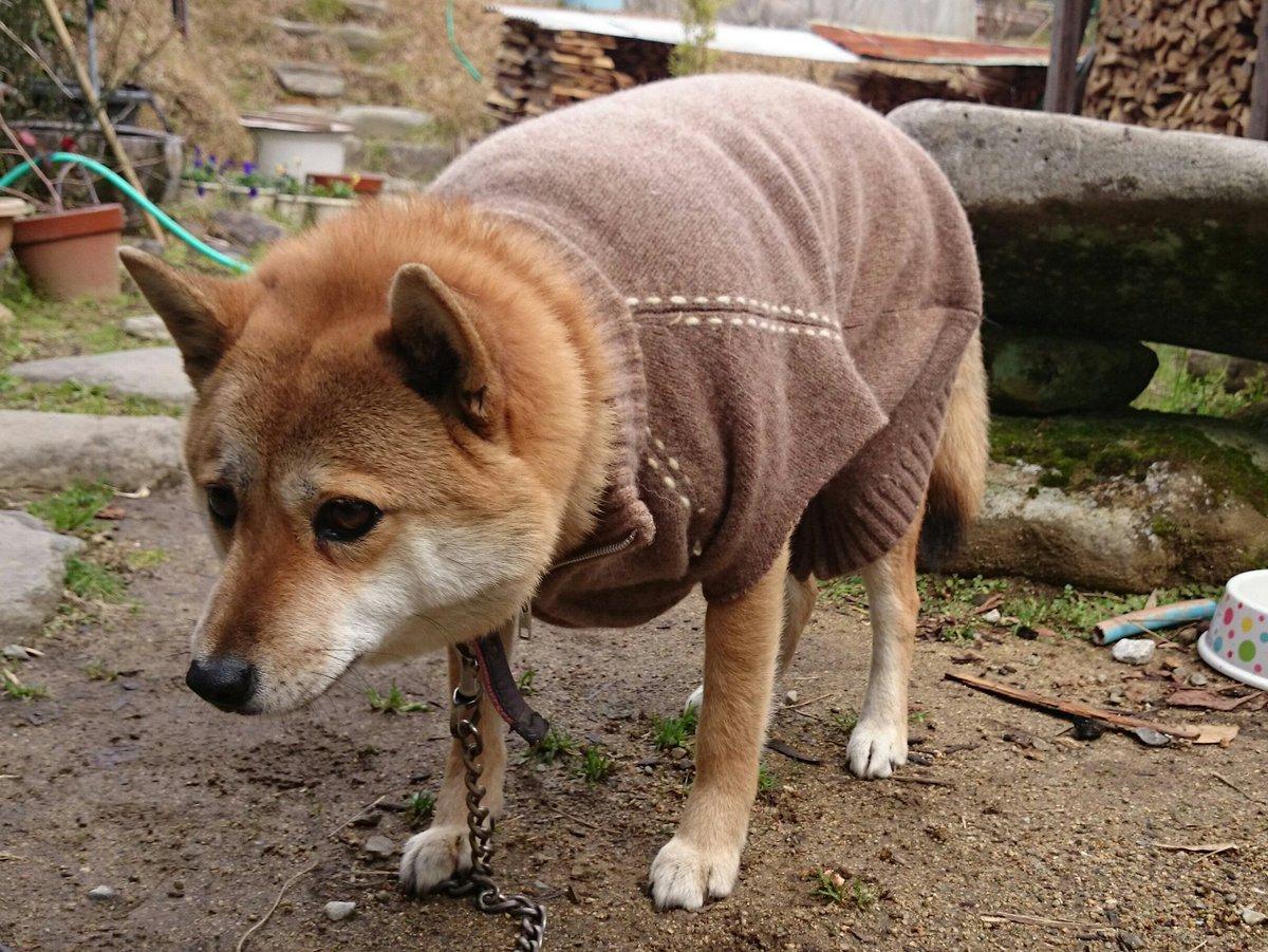 そんなに嫌なの?w初めて服を着た犬の顔がヤバイwww