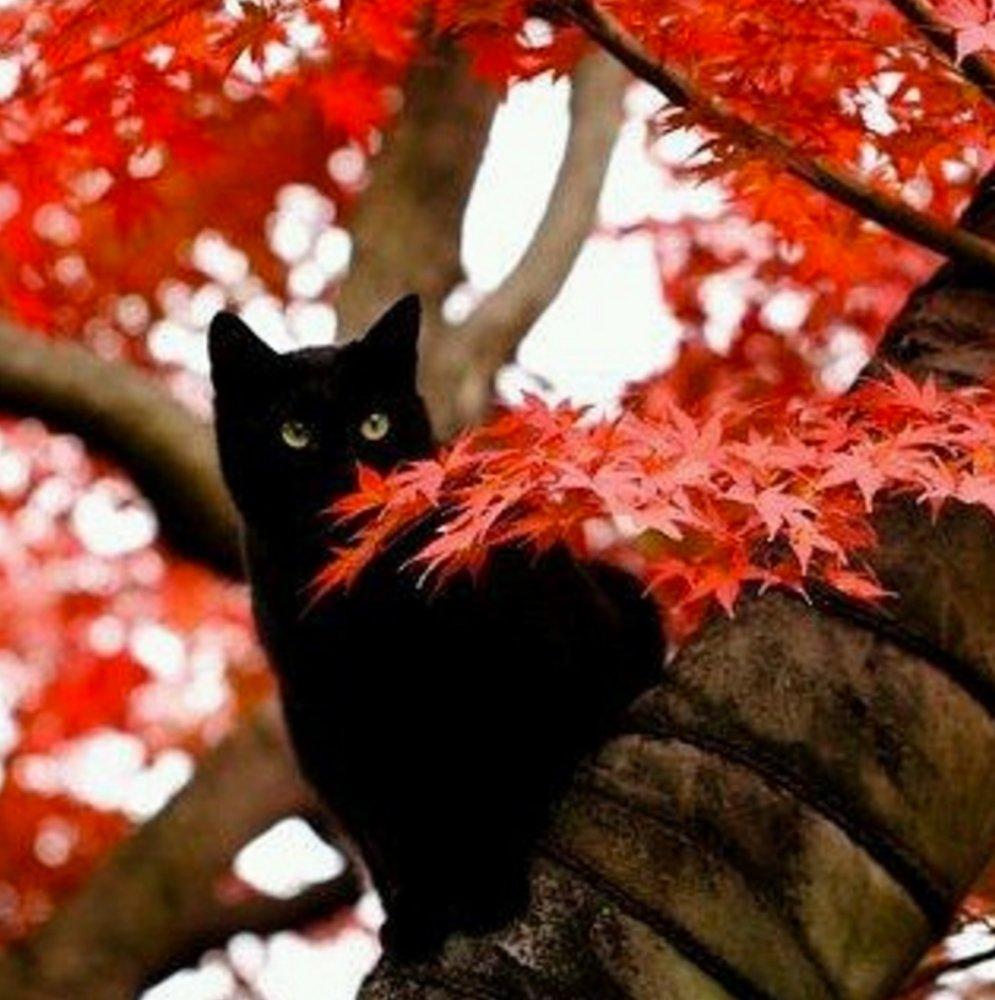 Autumn #kitty...