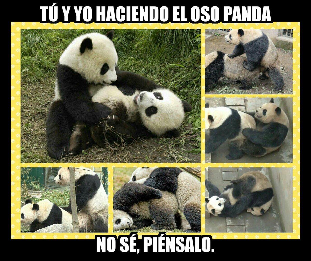 #ElAmorTocóAMiPuertaPero a mí sólo me gusta hacer el oso.  Lo sé, #Soy...