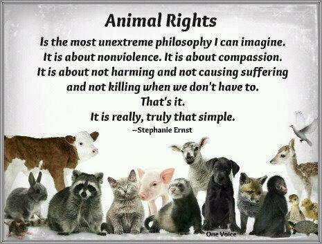 animal what rights Animal rights and animal welfare are entirely different within the concepts of animal rights, there is specieism, painism, animal liberation, veganism, vegetarianism, and more.