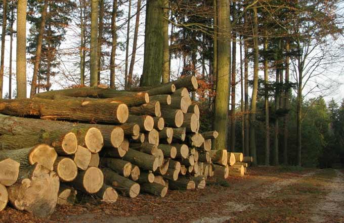 Hygiène et sécurité sur les chantiers forestiers: un décret précise la marche à suivre  http://www. forestopic.com/fr/foret/gesti on-des-forets/504-reforme-chantiers-forestiers-levee-boucliers &nbsp; …  #forêt #bois<br>http://pic.twitter.com/pZj48U5K19