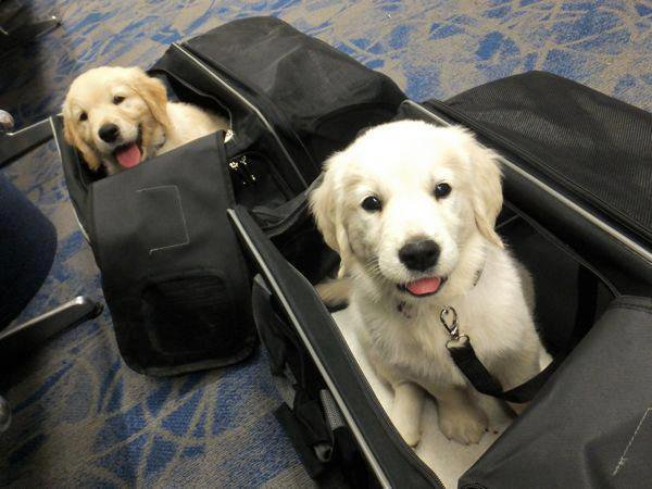 When you wonder how things go missing in your bag😨 #cute 😍 #travel ✈ #...