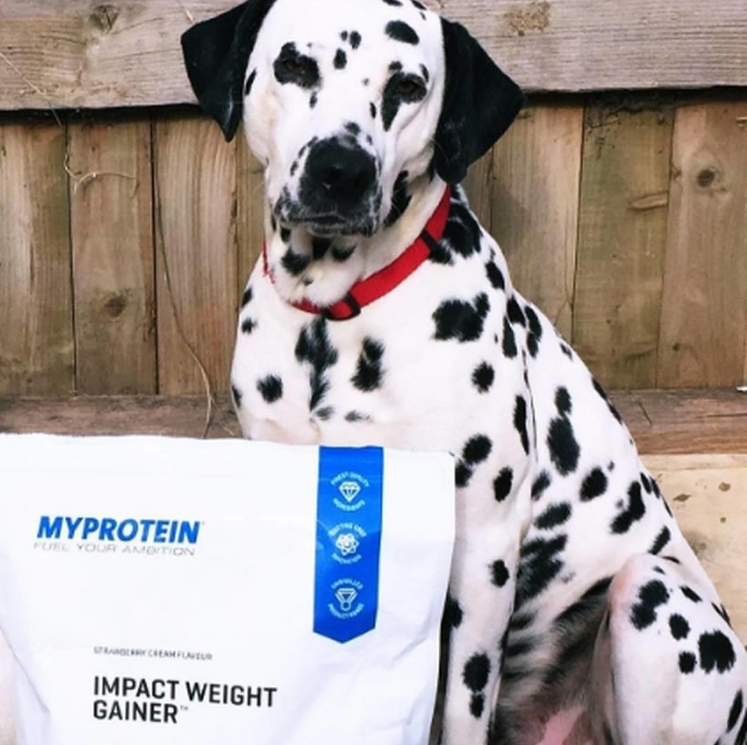 増加 プロテイン 体重