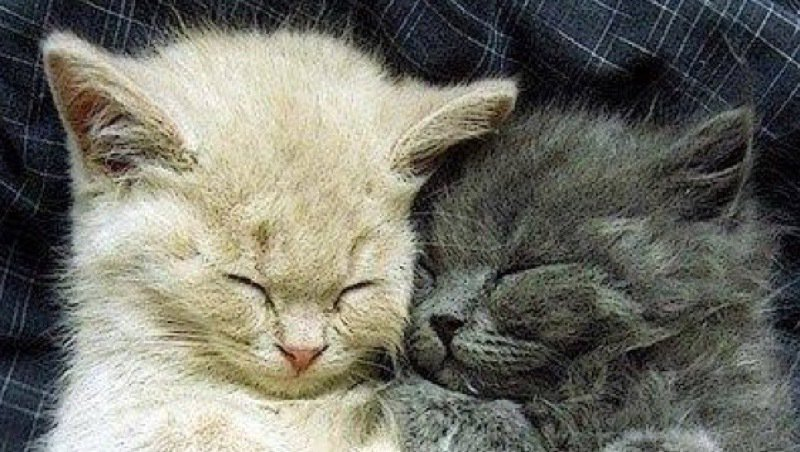 Sleeping beauties.....  [See ALL our best cat Pix here -