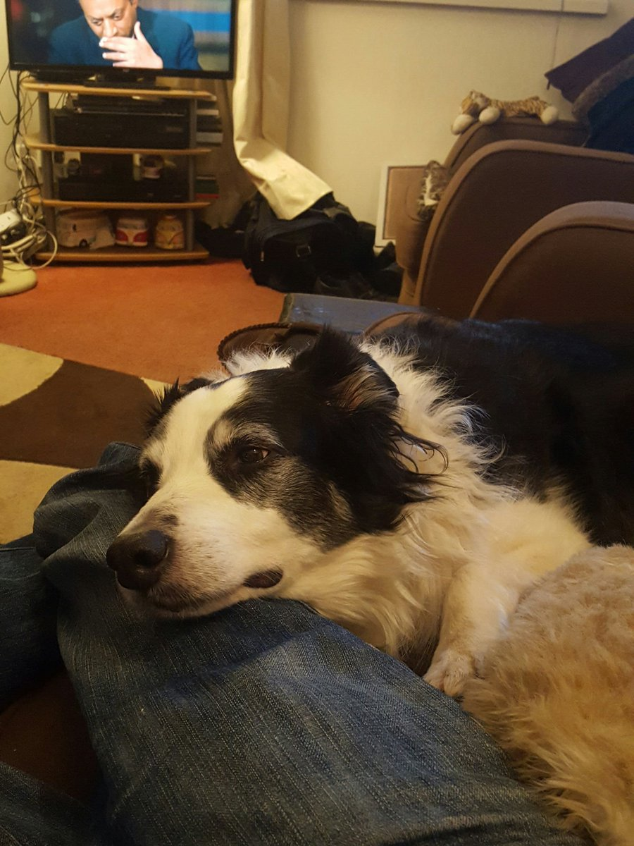 After a cold walk, relaxing with Harvey @BCTGB #bordercollie https://t.co/LTTUpwY9pP