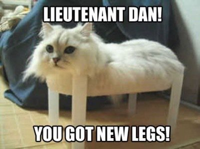 Hilarious !! [For more great cat pics: