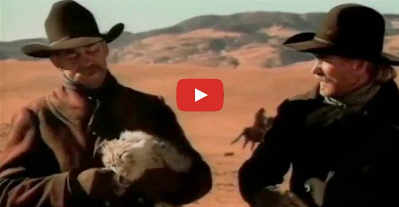 Cowboys Herding Cats ! CLICK to see this hilarious TV commercial [vide...