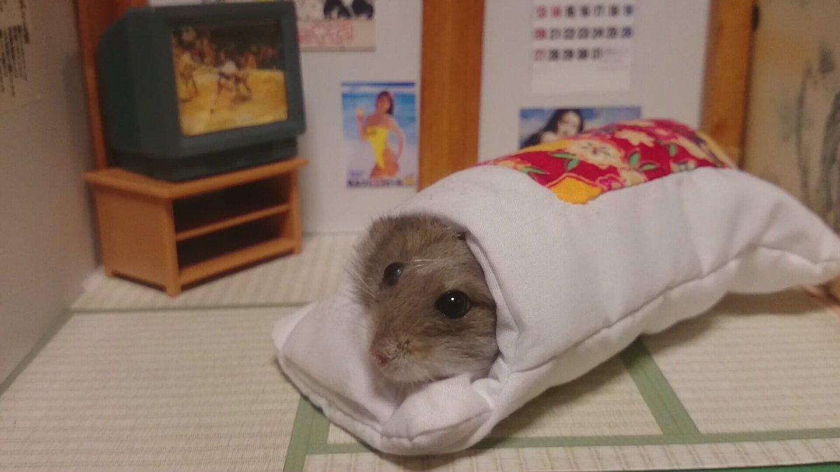 鉄平「おやすみやで」 pic.twitter.com/bTyqSjNCQc