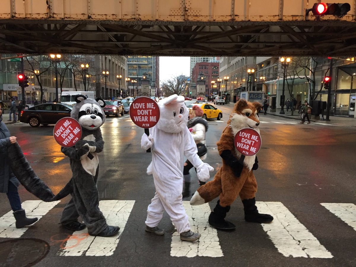 A raccoon, rabbit, & fox take over the L to ask #Chicago to love t...