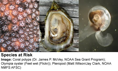 #Climate mythbusting fact: Ocean acidification (from excess CO2) threatens entire marine food chains.  https:// skepticalscience.com/ocean-acidific ation-global-warming-basic.htm &nbsp; … <br>http://pic.twitter.com/ZU5GMl9zGv